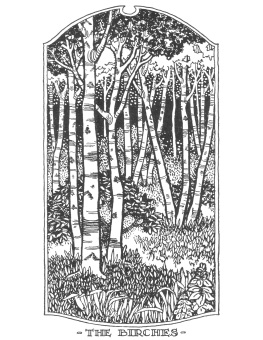Black and white graphic of birch trees